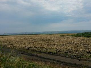 3 terenuri agricole amplasate în mun. Chişinău, sat.  Băcioi.