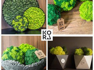 Стабилизированный мох и ягель в вашем интерьере !!! licheni si muschi stabilizati in interiorul dvs.