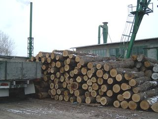 Продаем действующее деревообрабатывающее предприятие