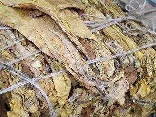 Табак вержиния