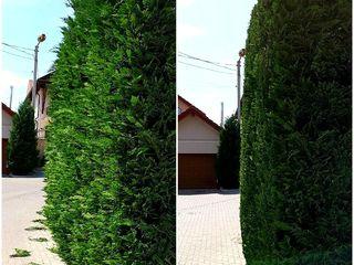 ландшафтный дизайн, стрижка газона, топиарная стрижка, уход за садом