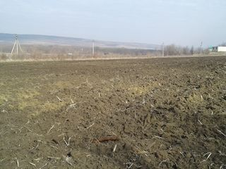 2,5 ha la traseul chisinau-ungheni cu constructie 30000 euro, arenda 24 mii lei anual