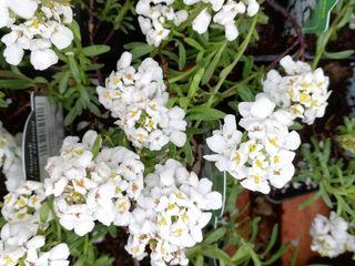 Plante decorative. Sortiment nou