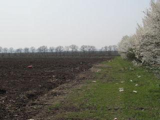 Lot de pamint agricol Straseni