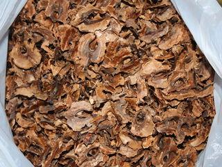 Продам перегородки грецких орехов