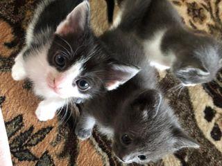 1 pisicuta dragalasa si jucausa cauta stapan.