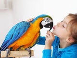 Любые виды крупных попугаев!