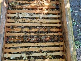 Продам столько семей пчёл,сколько Вам надо будет