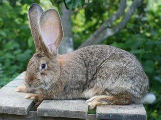 Продаю гранулированный комбинированный корм для кроликов от производителя .