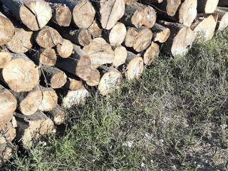 lemn foarte bun de carpan