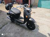 Wolf Motors 80cc
