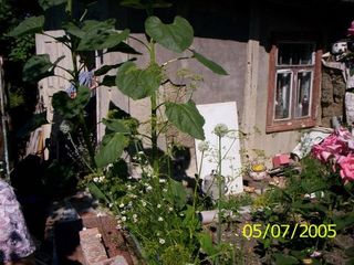 Продается дача под Новыми-Аненами, 12 сот , есть сад, рядом эл.линия