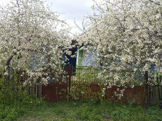 Vind casa in s.graseni,r.unghenii.33sot.-5000e