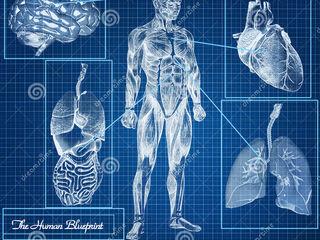 Modern bioresonant diagnostics metatron Vector Expert. Complete research of all organism.