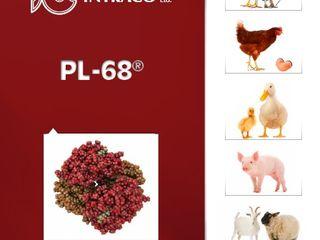 Sursă de poteină pentru animale produsă în Belgia! (Reduceri!!!)