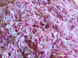 Petale de trandafir pentru ceai/dulceata