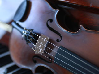 Vind vioara din  Cehia virsta 50 ani