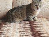 Se da pisica persoanelor care iubesc animalele,urgent..are in jur de 5,6 luni.