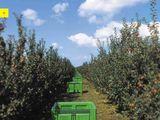Containere pentru mere/ceapa/cartofi/prune/struguri - Пластиковые контейнеры