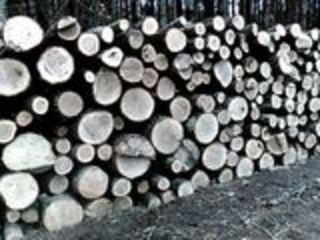 Lemn tare de foc , Stejar , Frasan ,Carpan