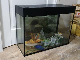 Acvariu de 80 litri, аквариум на 80 литров