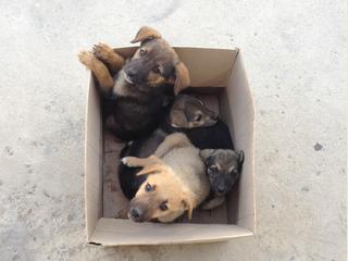 Умных щенят выкинули на скоростной