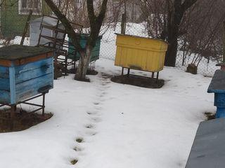 Stupuri pentru albini