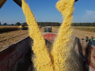 Оборудование для консервирования в полимерных рукавах зерновых и бобовых путем плющения