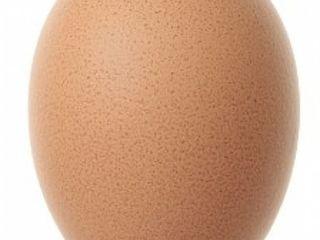 Cumpar oua pentru incubator