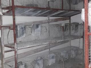 Vind custi pentru cresterea iepurilor