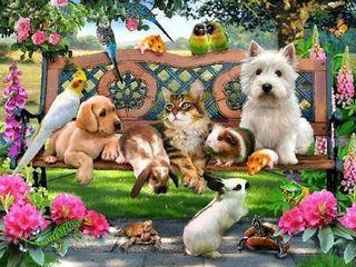 """Домашняя гостиница для животных """"Анастасия"""" всё как дома и без стресса!"""