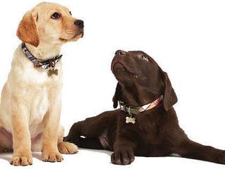 Dresaj canin Дрессировка собак