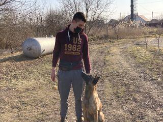 Dresaj canin/ дрессировка собак
