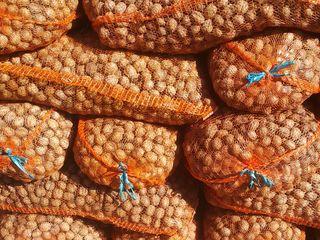 Продаём грецкий орех. 4 тонны.  Vindem nuci. 4 tonе.