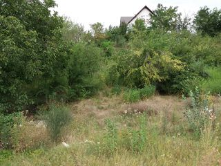 teren pentru construcţii or. Codru