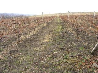 Vind teren agricol  vita de vie  livada