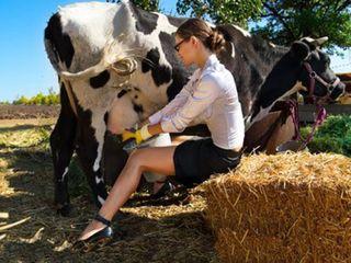 Aparate de muls - vaci, oi. capre !!!!
