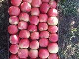 Cumpar mere la export idaret florina spartan mantuan z.banan golden semerenco,,,,,