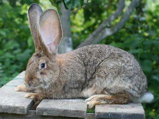 Продаю гранулированный комбинированный корм для кроликов  и шиншилл от производителя .