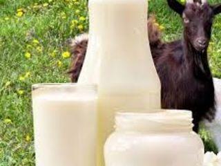 Vindem lapte de capre, în cantitați mari și mici !!!