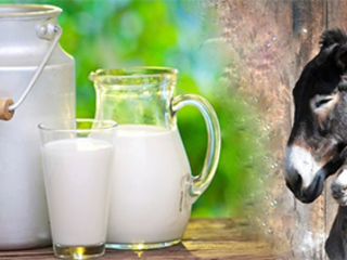 Ослиное молоко