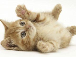 Дом кошке на время отпуска / кэтситтер / кот на передержку / отель коту