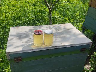 Vindem miere  de salcâm 120 lei/kg.