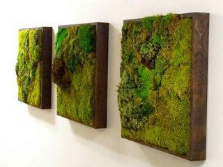 Зеленые картины или Моховые панно