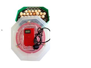 Incubatoare de oua la preturi avantajoase.
