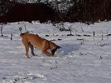 пару зимней 15с 22570 На щенков бельгийской овчарки