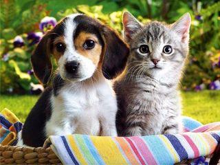 Medic  veterinar la  domiciliu.  or. Balti si  rejiunea  lui.