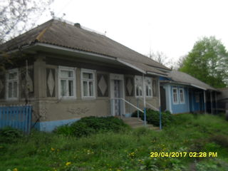 Vind  2 gospodarii una linga alta in satul Colicauti Raionul Briceni
