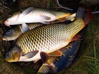 Дать объявление рыбоводство подать объявление в новодвинске
