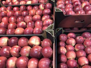 купим яблоки все сорта в г Брянске также  таможенные услуги Вашей продукции.
